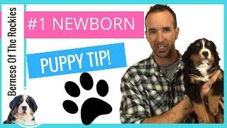#1 Newborn Puppy Health Tip For Dog Breeders
