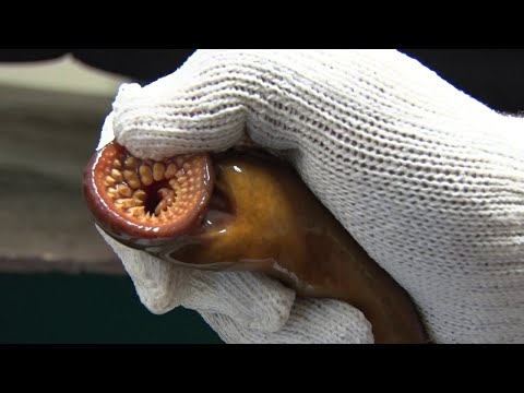Most EXTREME Parasites In The World