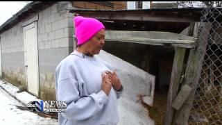 Chesterfield Woman Finds Her Pet Goats Slaughtered