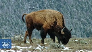 Yellowstone National Park - Part 4