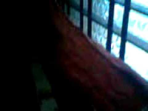 Attumanal payayil malayalam movie Run baby Run song HD