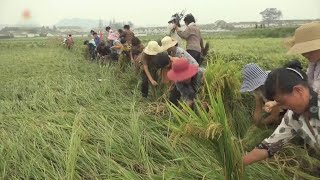 식량난 속 장마철 맞은 북한…수해 예방에 안간힘 / 연합뉴스TV (YonhapnewsTV)