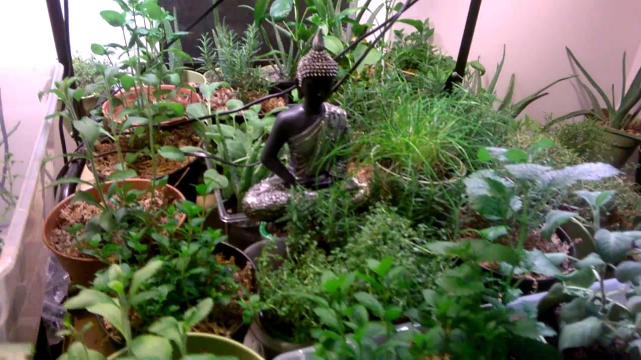 Indoor Container Gardening: Lighting