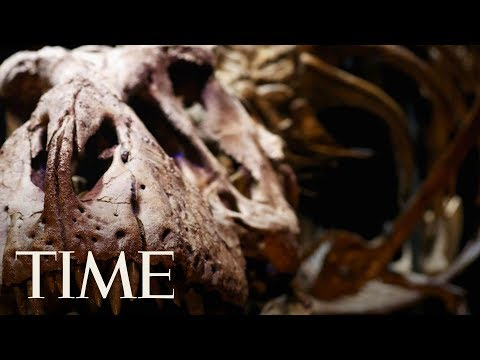 Download Youtube: Turns Out T. Rex Would've Broken Its Tiny Legs If It Tried To Run, Contrary To Jurassic Park | TIME