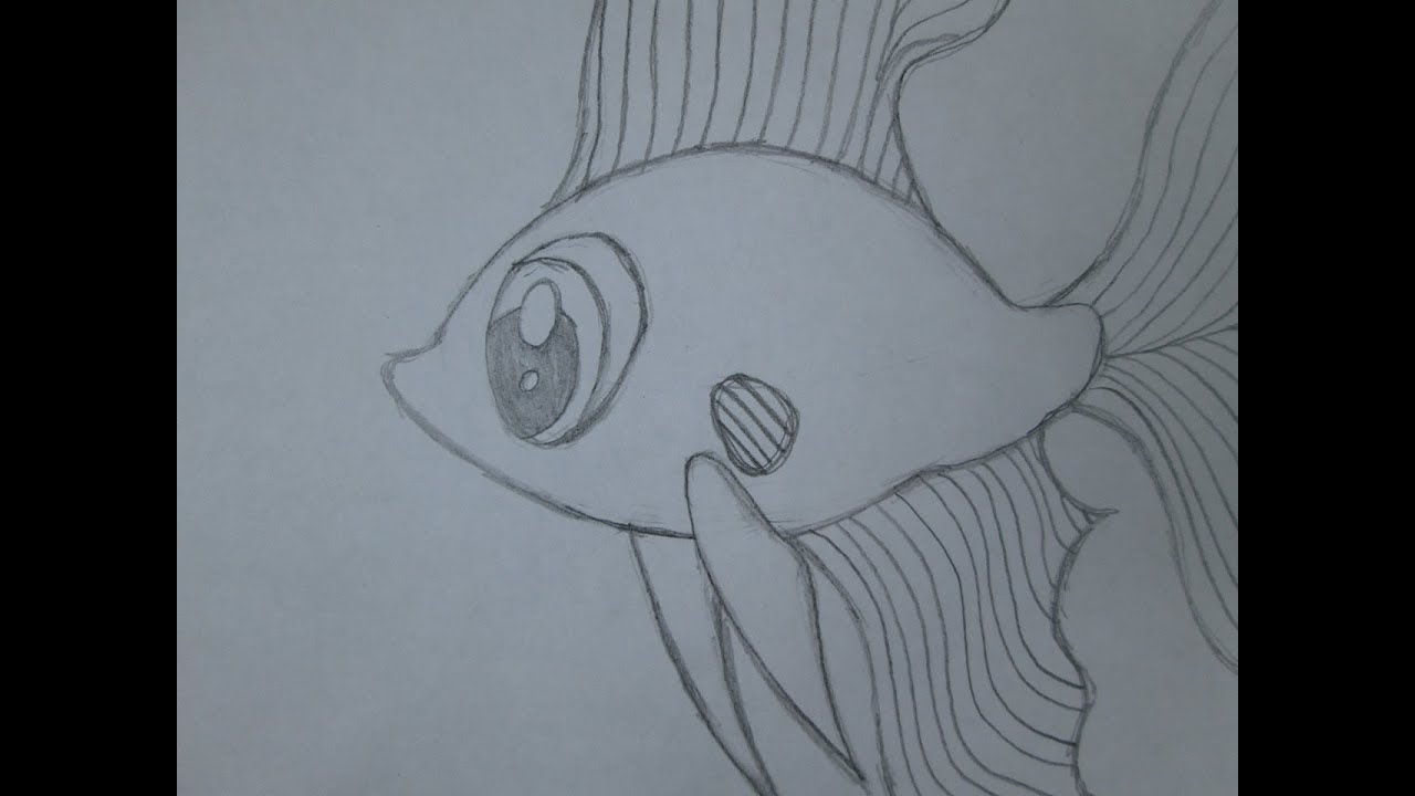 How To Draw A Betta Fish Youtube