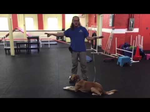 Confidence Building Work With Dog, From Nervous To Confident Periscope