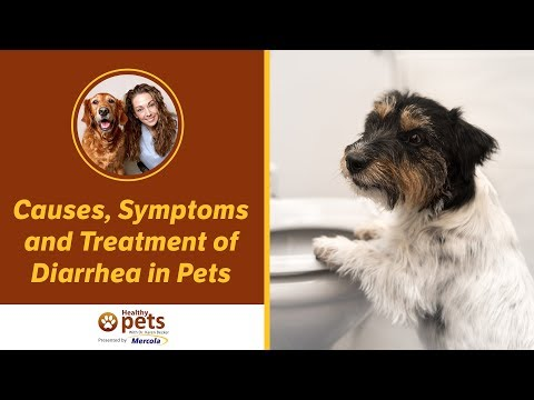 Causes, Symptoms and Treatment of Diarrhea in Pets