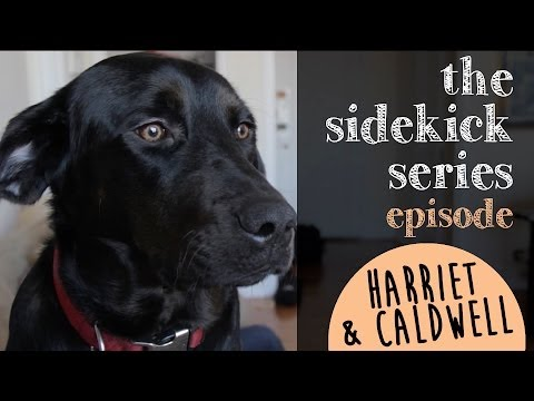 Episode 6: Harriet the rescue dog & College Humor's Caldwell