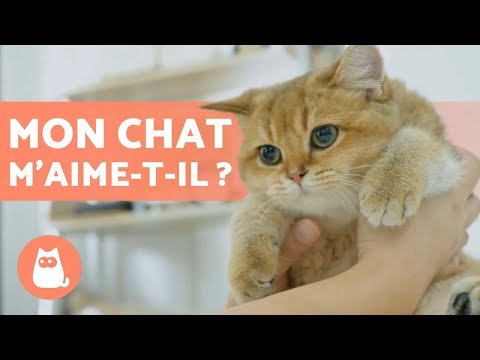Que RESSENTENT Les CHATS ? Les Chats Ont-ils Des SENTIMENTS ? 😸