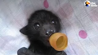 Baby Bats Who Lost Their Families Are Getting The Care They Need
