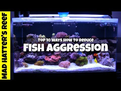 Top 10 Ways How To Reduce Saltwater Fish Aggression