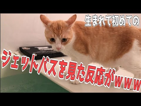 初めてジェットバスを体験した猫の反応がすごかったwww