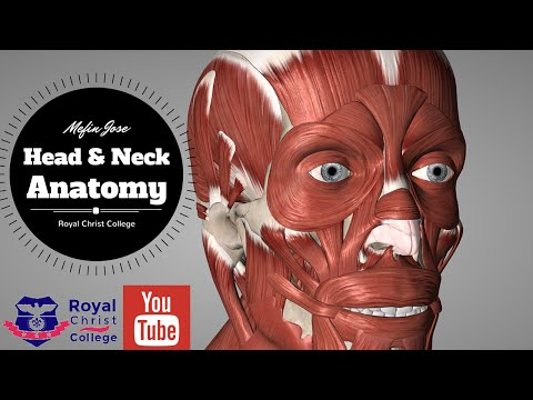 Head and Neck Muscle Anatomy | Facial Muscles & Neck Muscles Anatomy