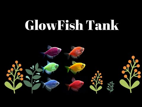 GlowFish Tank