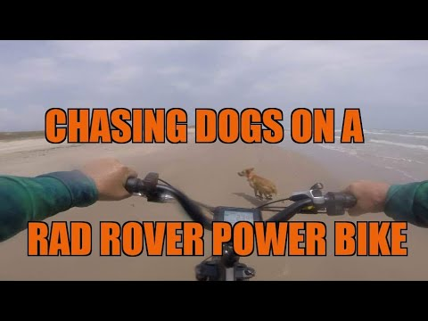 Chasing Dogs with my Son on a Rad Rover Power Bike