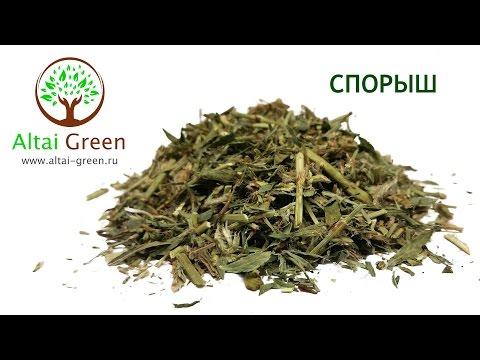 Спорыш (Горец птичий) - польза и применение травы спорыш.