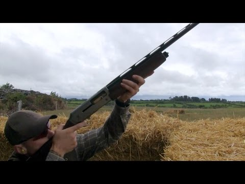The Shooting Show – Irish crow shooting and South African blesbuck