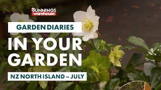 Gardening in July   NZ North Island   Bunnings Garden Diary
