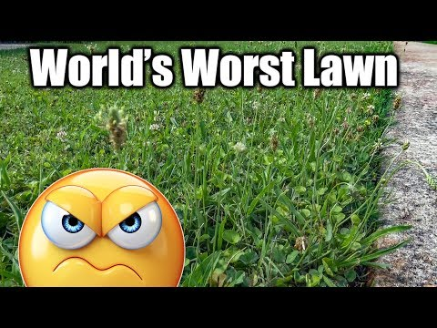 Lawn Full of Weeds - Fix Ugly Lawn