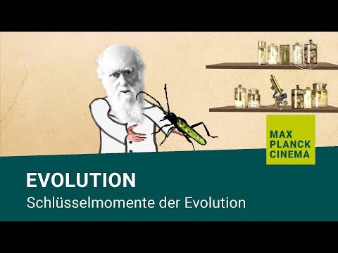 Evolution - Schlüsselmomente Der Evolution
