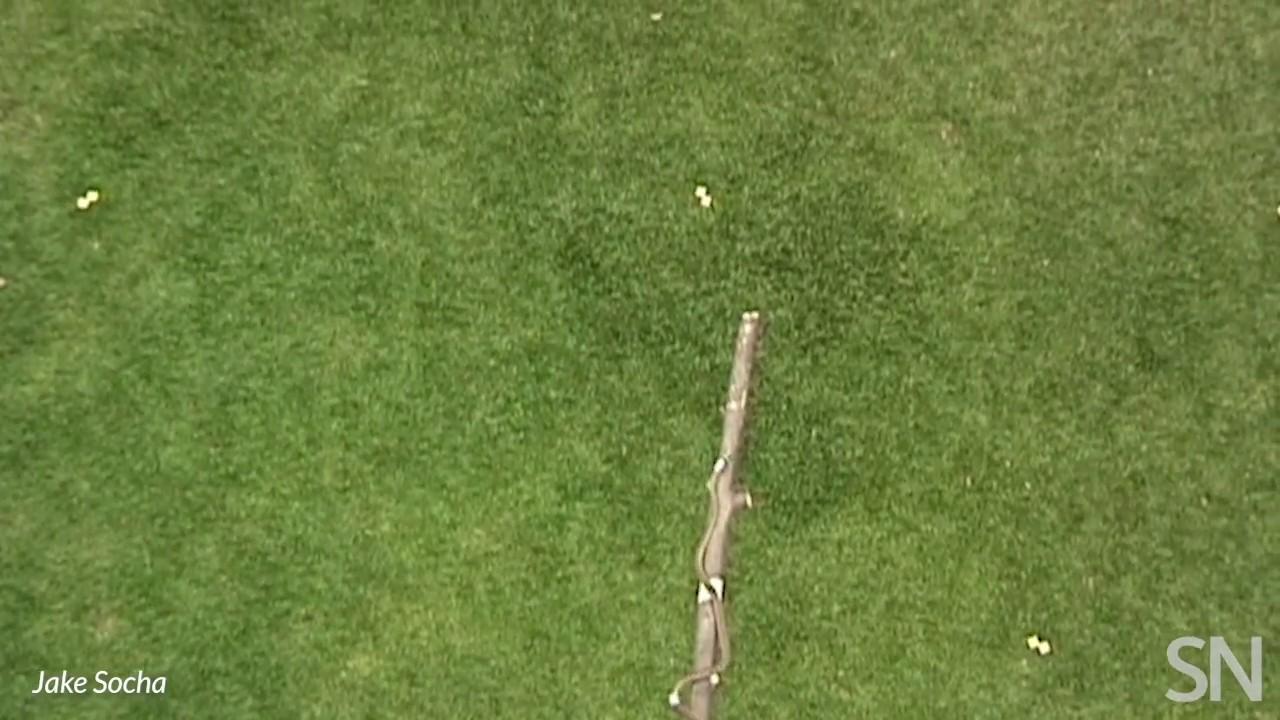 INÉDITO: Cobras voadoras intrigam cientistas. (veja o video)
