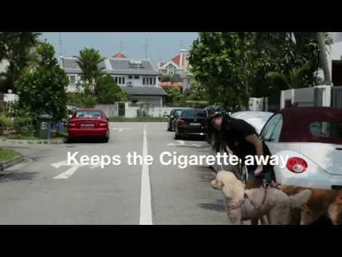 Group 6 - 'A companion a day, Keeps the cigarette away'