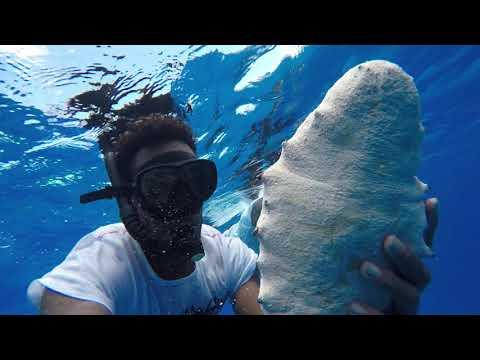 Free dive, Ongtong Java, Solomon Islands