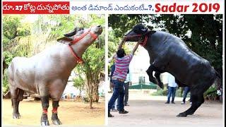 Sartaj - The Murra Bull Worth 27 Crores | Biggest Bull In #Sadar2019 | Hyderabad Sadar Festival
