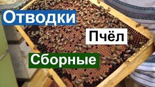 Пасека #84 Отводки Сборные, Как размножить Пчёл Пчеловодство для начинающих