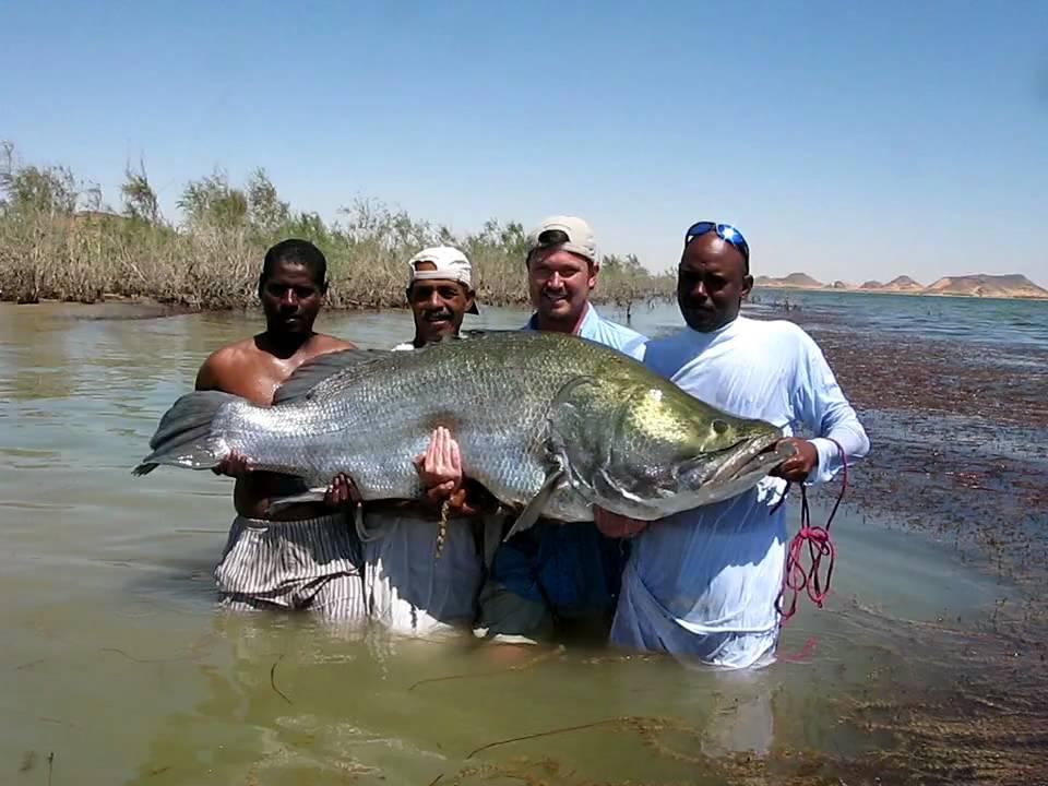 Nile perch fishing egypt lake nasser youtube for Lake of egypt fishing report