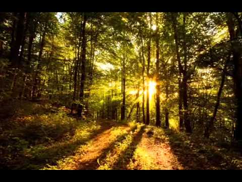Paul van Dyk - nothing but you - Nature mix