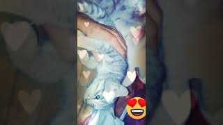 New funny cat video 2020 《 Angry cat》