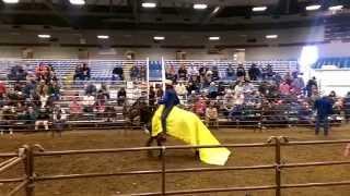 Amazing Mule