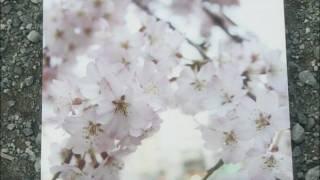 九州男 3/11発売 シングル「桜道」 着うたフル先行配信中 http://recoch...