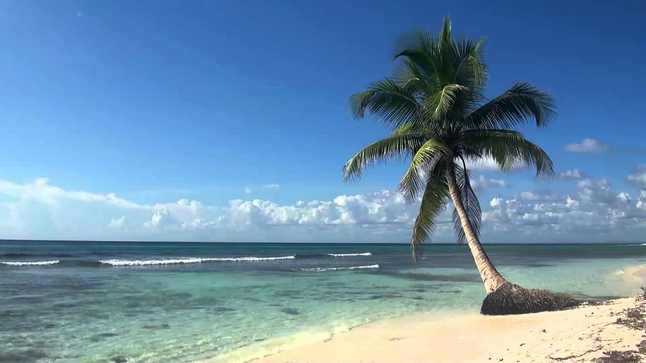 Palm Trees On The Beach: Relaxing 3 Hour Video Of Tropical Beach With Blue Sky