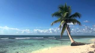 Relaxing 3 Hour Audio Of Tropical Beach With Blue Sky White Sand And Palm Tree