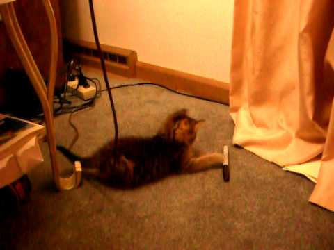 Stupid cat tricks part 2