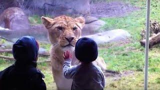 أكثر 10 لحظات صادمة في حديقة الحيوانات