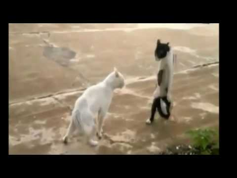 funny cat videos | Funny Kitty Cat Compilation 2016 | Funny Cat & Cute Kittens Fail Videos 2