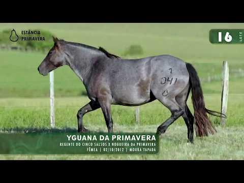 LOTE 16 - Yguana da Primavera