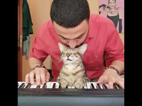 There are two means of refuge from the miseries of life: Music and cats