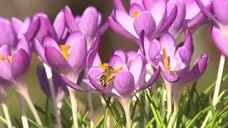 SONNE SATT UND MILD: Der Frühling naht am Wochenende