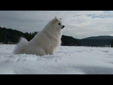 Dog Behaviour And Language - Territorial/Overprotective Aggression - Genetics