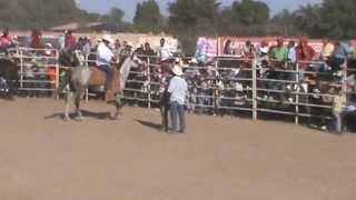 cohuibampo 2013 ,rodeo che rios presente