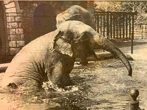 History of the Johannesburg Zoo
