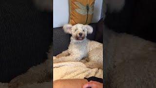 Adorable Doggo with Floppy Ears || ViralHog