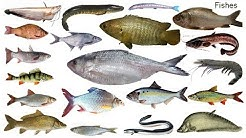 Fish Names Meaning & Picture | মাছের নাম | Necessary Vocabulary Tutorial