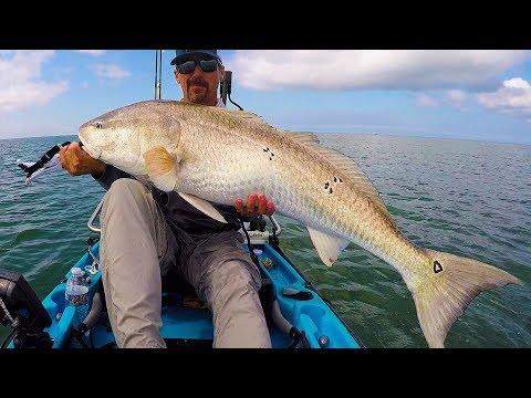 How To Catch Bull Drum! (Giant Redfish Tutorial)