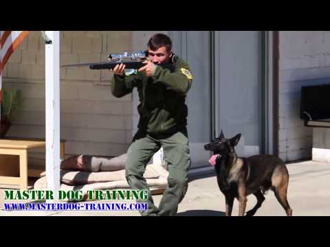 K9 Police Dog Training - Police Tactics