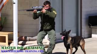K9 Police Dog Training - Police Tactics